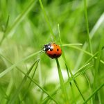 5 Pro Tips to Keep Insect and Pests Out of Your Garden