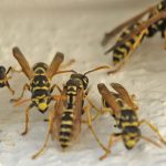 How to Choose Pest Control Services For Offices