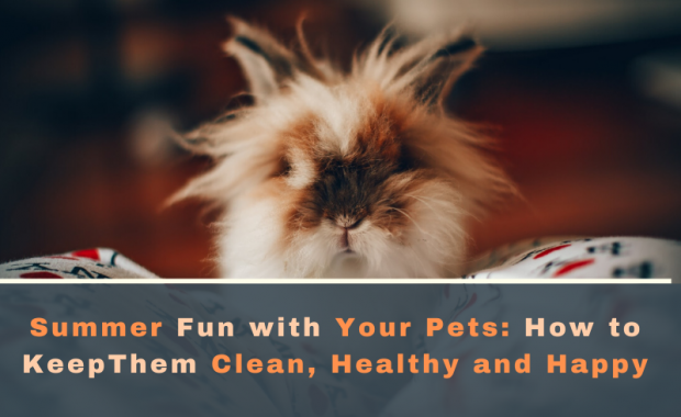 Summer Fun with Your Pets