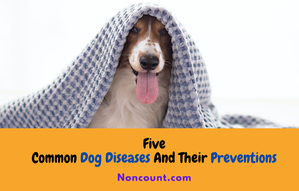 Five Common Dog Diseases And Their Preventions