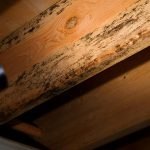 Everything You should Know about Termite Inspectors