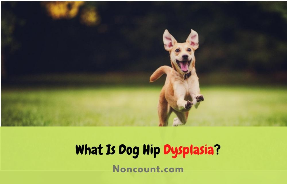 What Is Dog Hip Dysplasia
