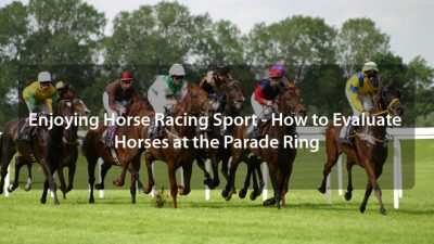 Enjoying Horse Racing Sport – How to Evaluate Horses at the Parade Ring