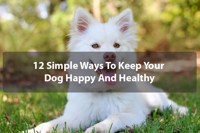 12 Simple Ways To Keep Your Dog Happy And Healthy