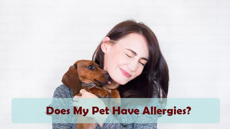 Does My Pet Have Allergies?